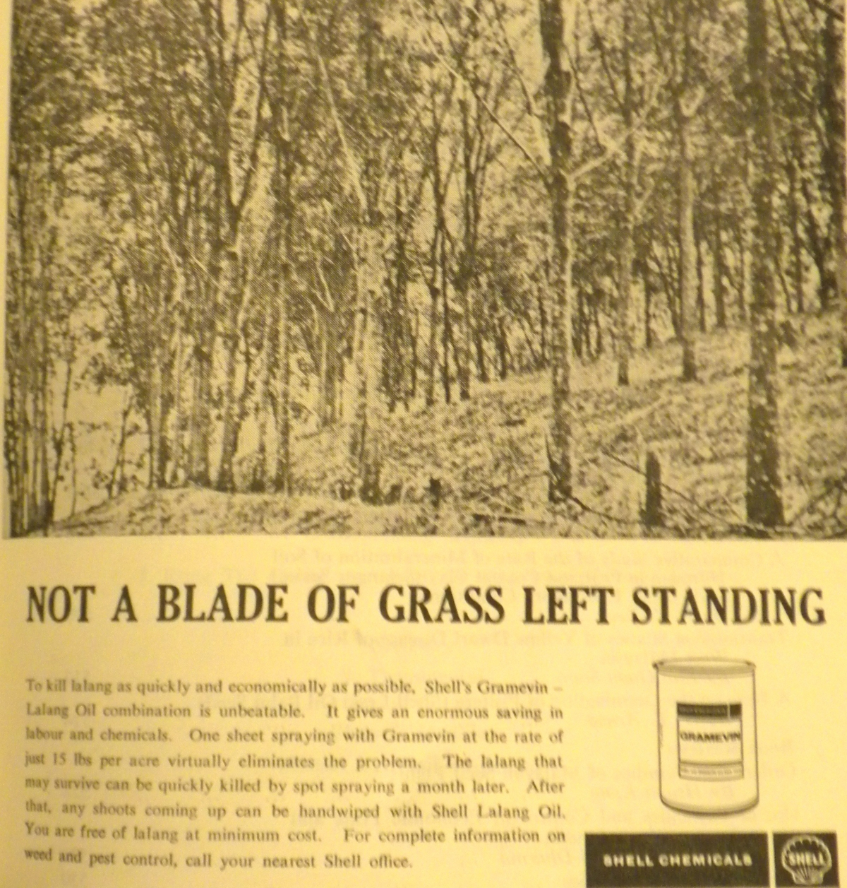 """Not a blade of grass left standing"""